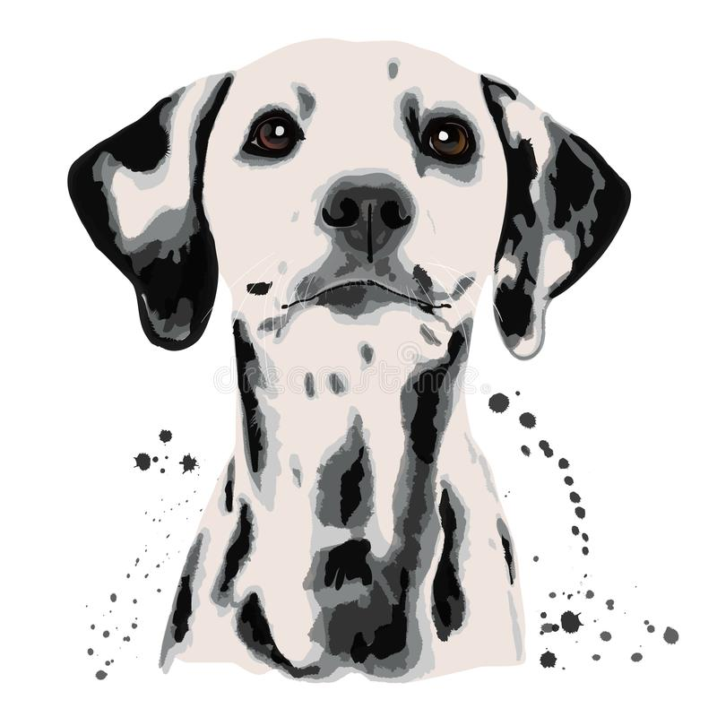 Dalmatian y manchas blancas /negras que el ` s del perro dirige stock de ilustración