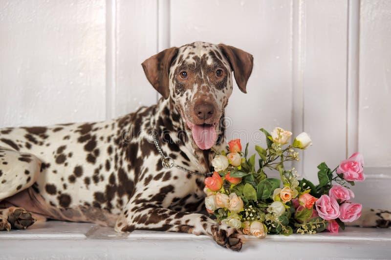 Dalmatians en bloemen stock fotografie