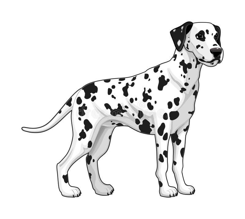 Dalmatiner. stock abbildung