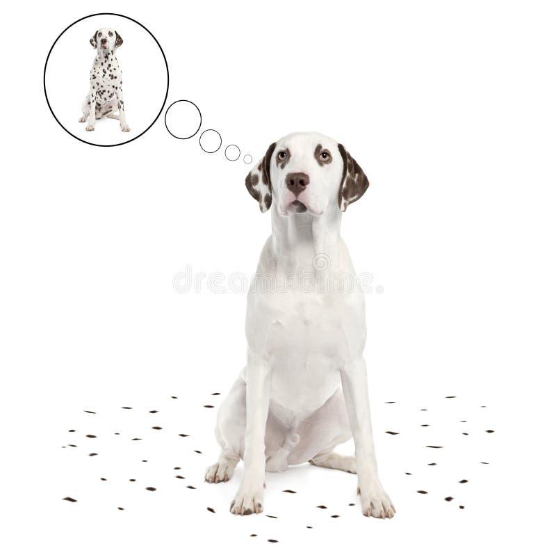 Dalmatiner, der seine Punkte verschüttet lizenzfreie abbildung