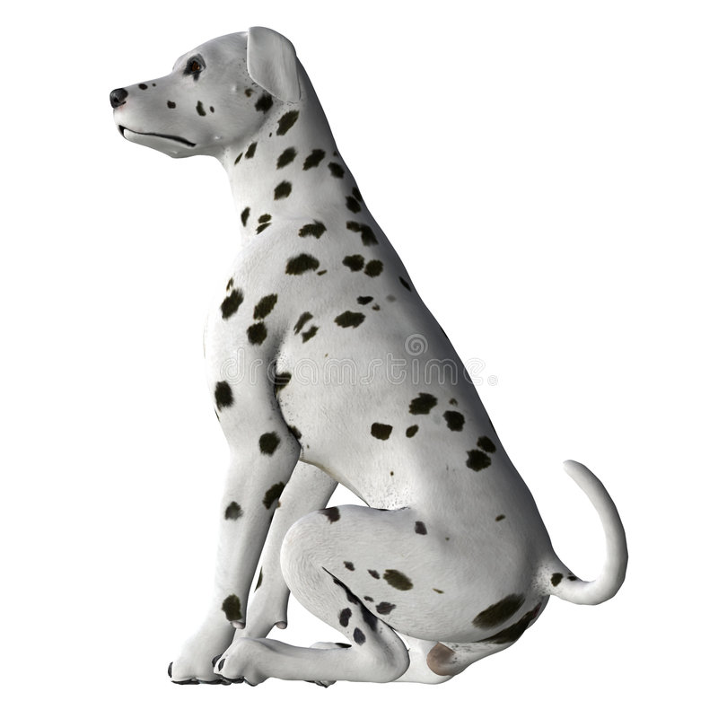 Dalmation - 01 royalty free stock images