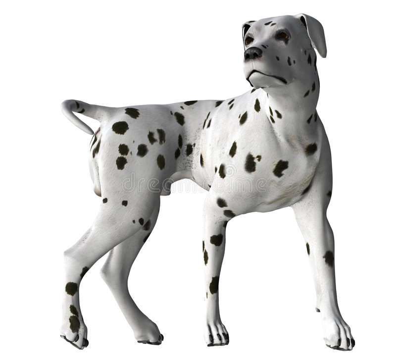 Download Dalmation - 04 stock illustration. Image of attack, canine - 1999933