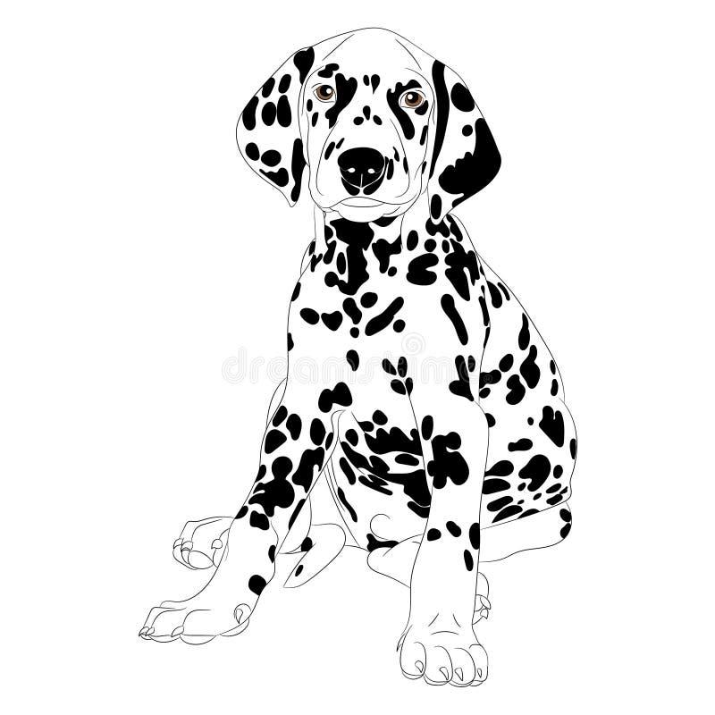Dalmatisch hondpuppy stock illustratie