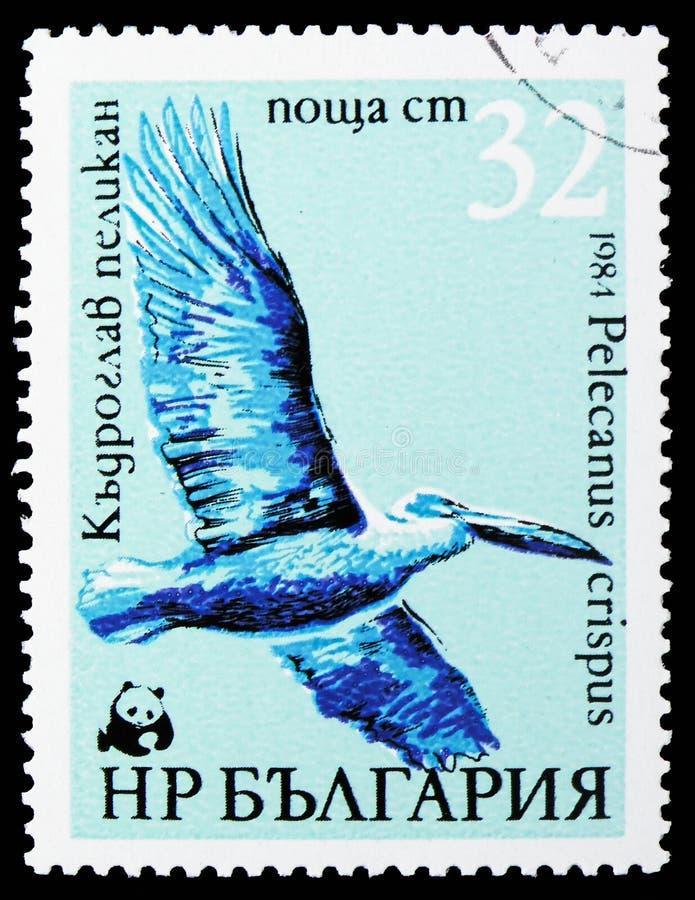 Dalmatyński pelikan, WWF pelikanów seria około 1984, (Pelecanus crispus) obrazy stock