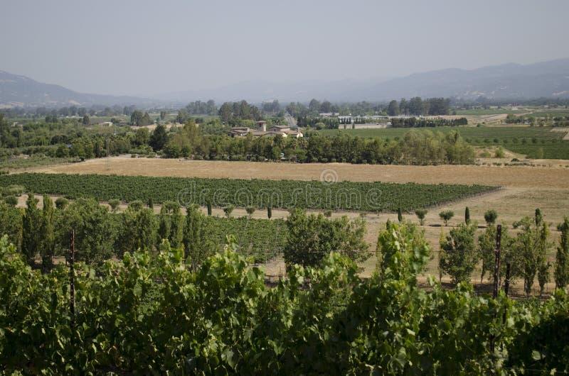 Dalsikt av en nordliga Kalifornien vingård arkivbild