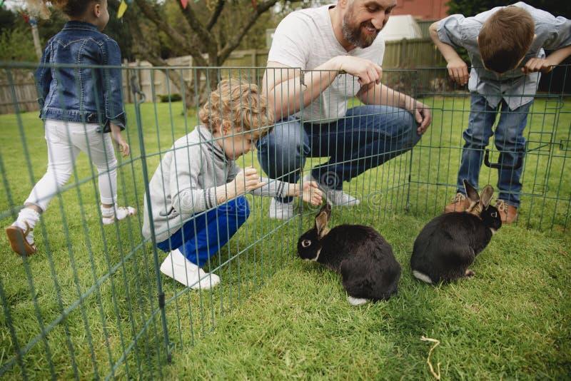 Dalta kaninerna arkivbilder