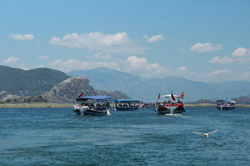 Dalyan river. The seagull caught the fish stock image