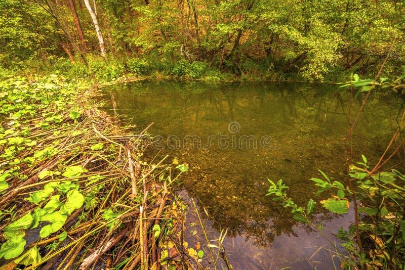 Dam built by beavers. Autumn landscape Dam, built by beavers on a small river stock photos