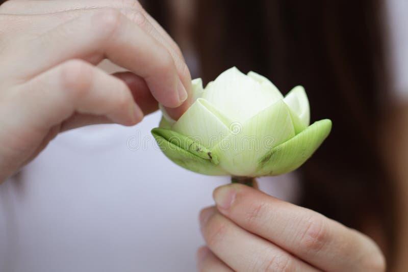 Dam` s räcker det hopfällbara härliga gröna organiska bladet för Lotus ` s, anvisning för blommavikning, meditation royaltyfri foto