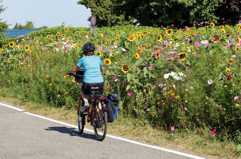 Dam som cyklar vid ett fält av färgglade vildblommor arkivbilder