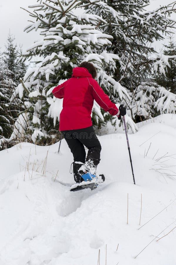 Dam som snöar i skog royaltyfria bilder