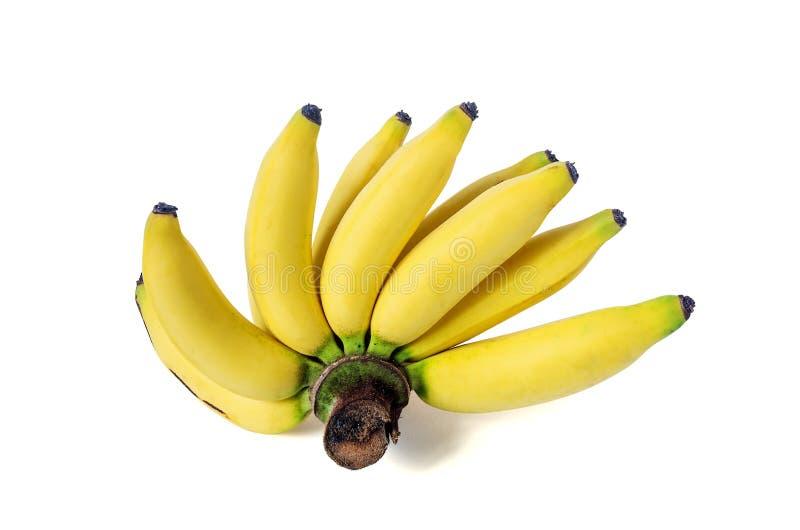 Dama Palcowy banan zdjęcie stock