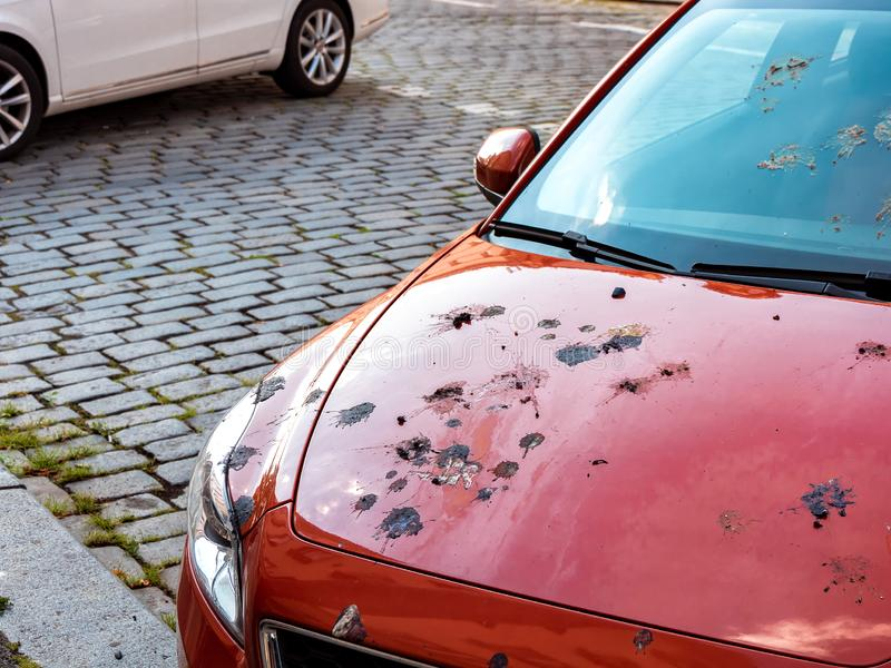 Car Damage by Bird Droppings. Damage by Bird Droppings, Many Excrements on the Hood of the Car stock image