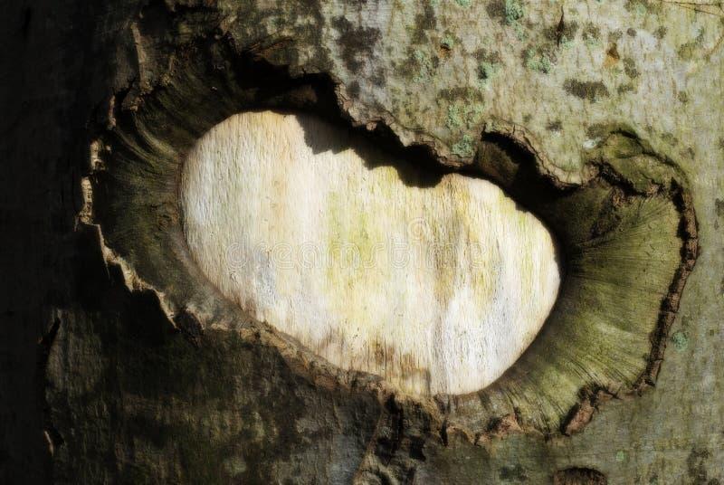 Damage On Tree Stock Photography