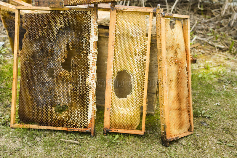 Damaged Bee Hive Frames stock photo. Image of wooden - 91641026