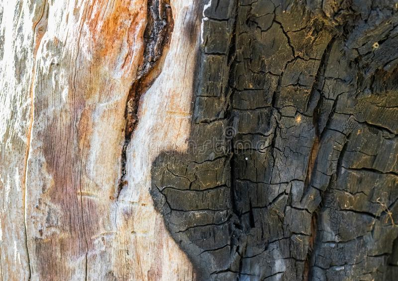 Damaged and burnt tree bark royalty free stock images