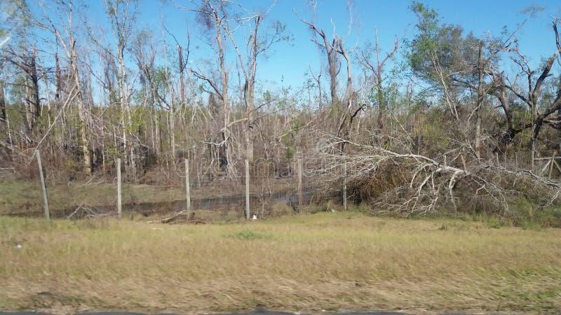 Damaged Trees royalty free stock photo
