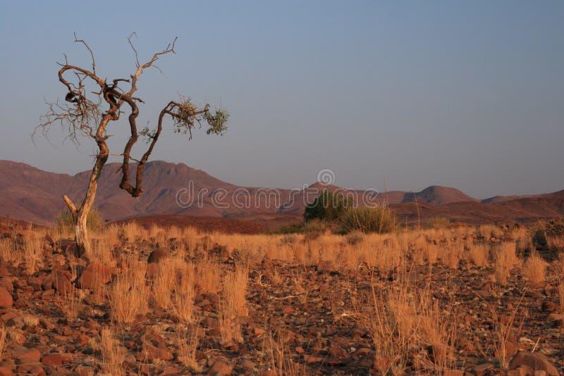 Download Damaraland, Namibia immagine stock. Immagine di rosso - 7302409