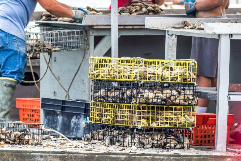 Damariscotta, Maine, Etats-Unis - 2 juillet 2018 : Huître cultivant en rivière de Damariscotta impliquant des pièges, cages, et t photographie stock libre de droits