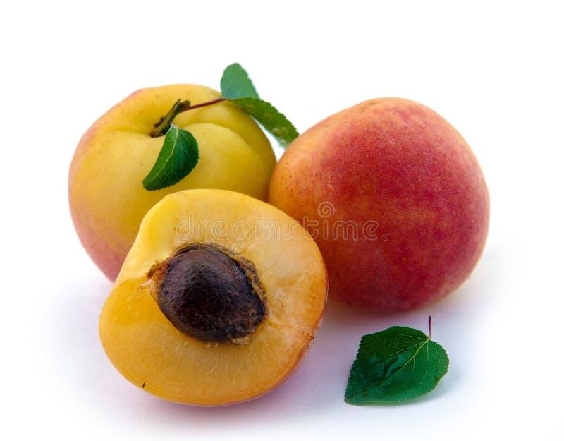 damasco isolado Frutos de damascos cortados frescos isolados fotos de stock