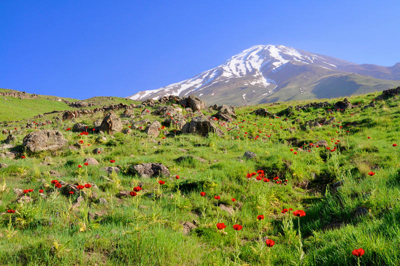 Damavand in Iran. Picturesque green meadow with poppies and volcano Damavand in the background, Iran stock photography