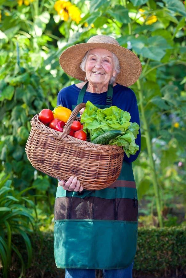 Dame âgée avec le panier des légumes au jardin photos libres de droits