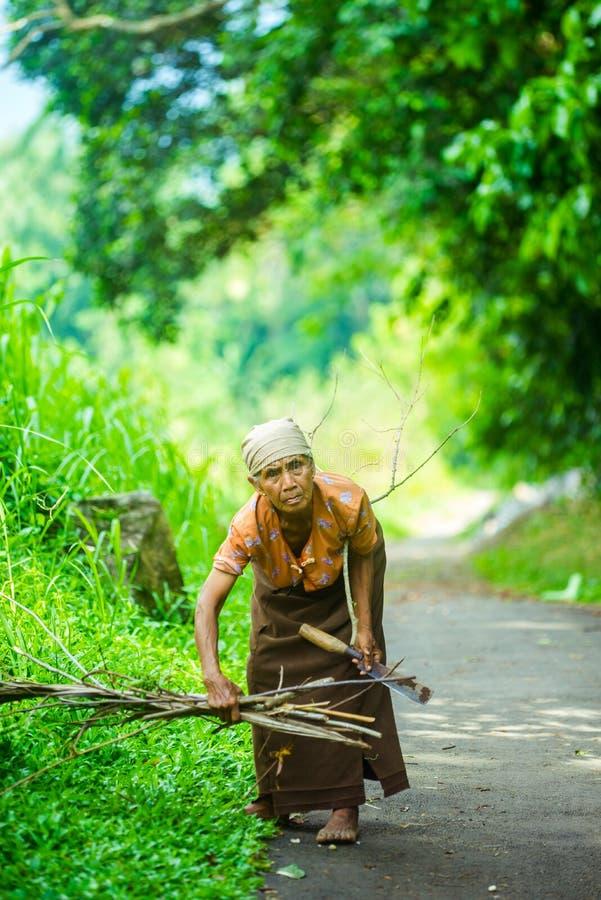 Dame âgée indonésienne recherchant le bois sec pour la cuisson photos stock