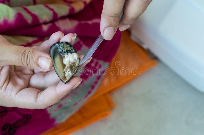 Dame âgée remet la coquille fraîche s'ouvrante de moule avec un couteau images libres de droits