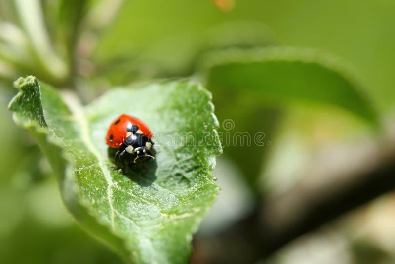 Download Dame Bug stock afbeelding. Afbeelding bestaande uit ecosysteem - 54076055