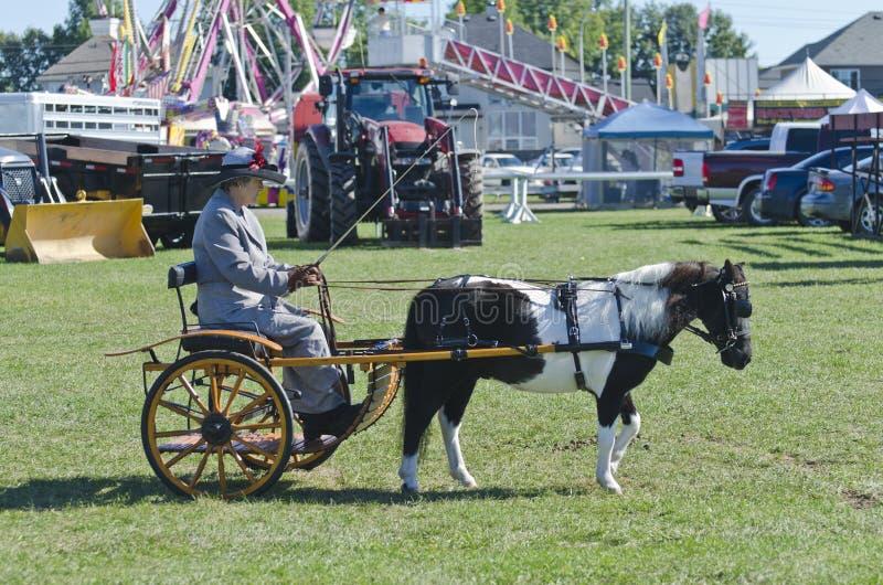 Dame im Buggy mit Minipferd am Land angemessen stockfotografie