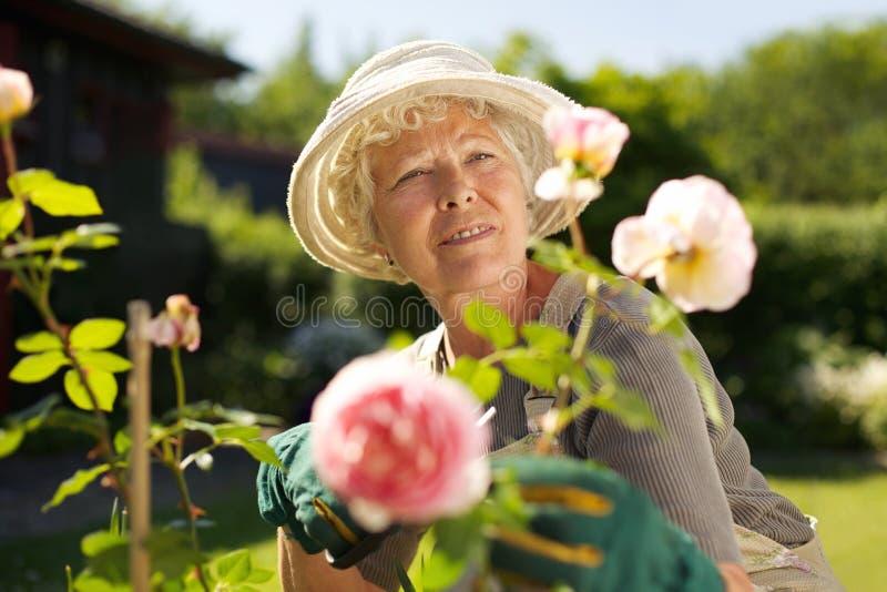 Dame mûre décontractée travaillant dans son jardin photographie stock