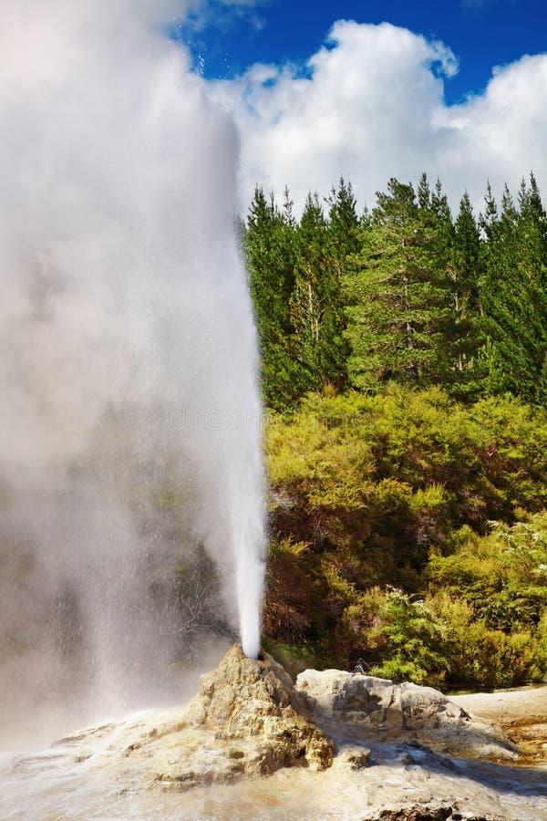 dame Nouvelle Zélande de knox de geyser images libres de droits