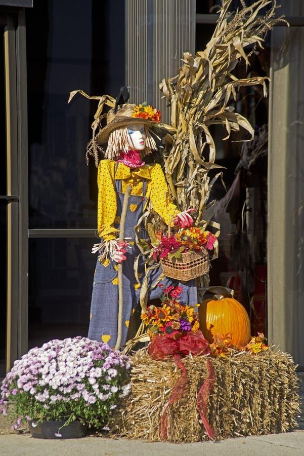 Dame Scarecrow, hooibalen, pompoenen, en kleurrijke mums stock foto's