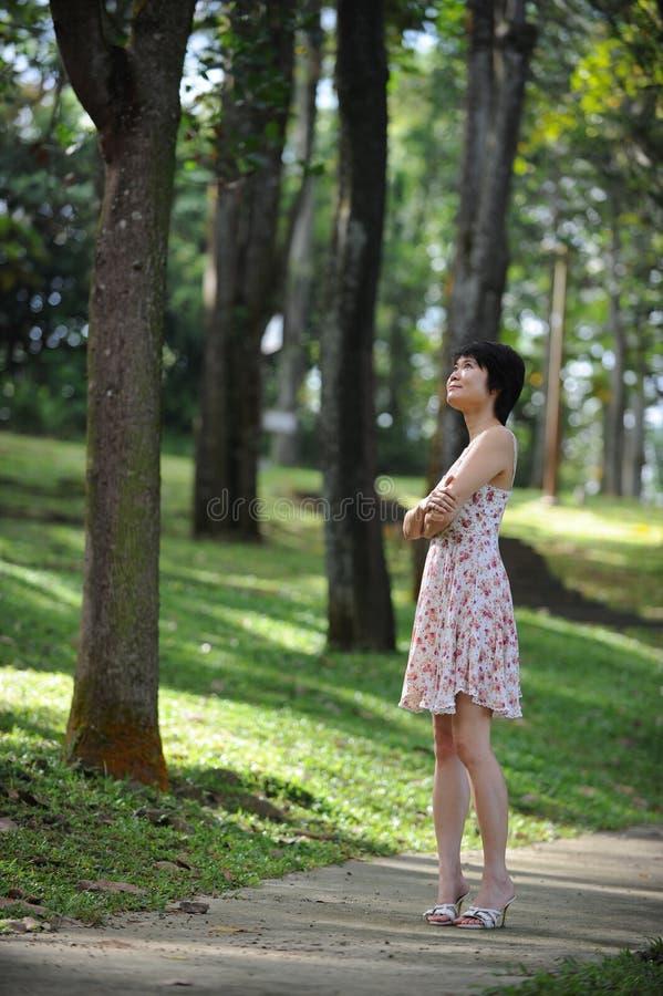 Dame und Baum lizenzfreie stockfotografie