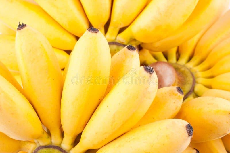 DameFinger banaan en hand van gouden bananen op wit geïsoleerd fruitvoedsel het achtergrond gezond van Pisang Mas Banana stock afbeeldingen