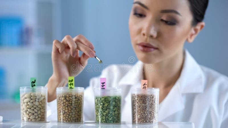Damenbiochemiker, der Inspektions-Nahrungseigenschaften des Erbsenkorn-biologischen Lebensmittels analysiert lizenzfreie stockfotografie