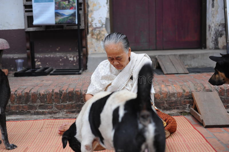 Dames âgées donnent la nourriture aux chiens photo stock
