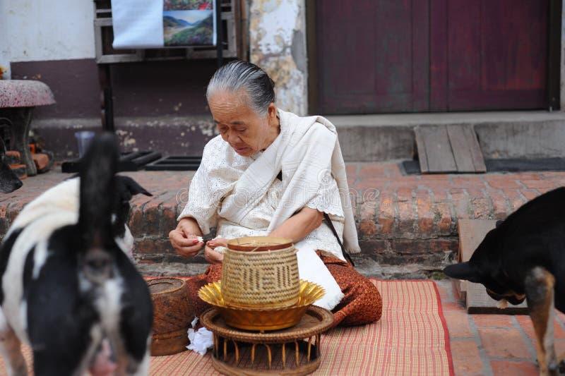 Dames âgées donnent la nourriture aux chiens photographie stock