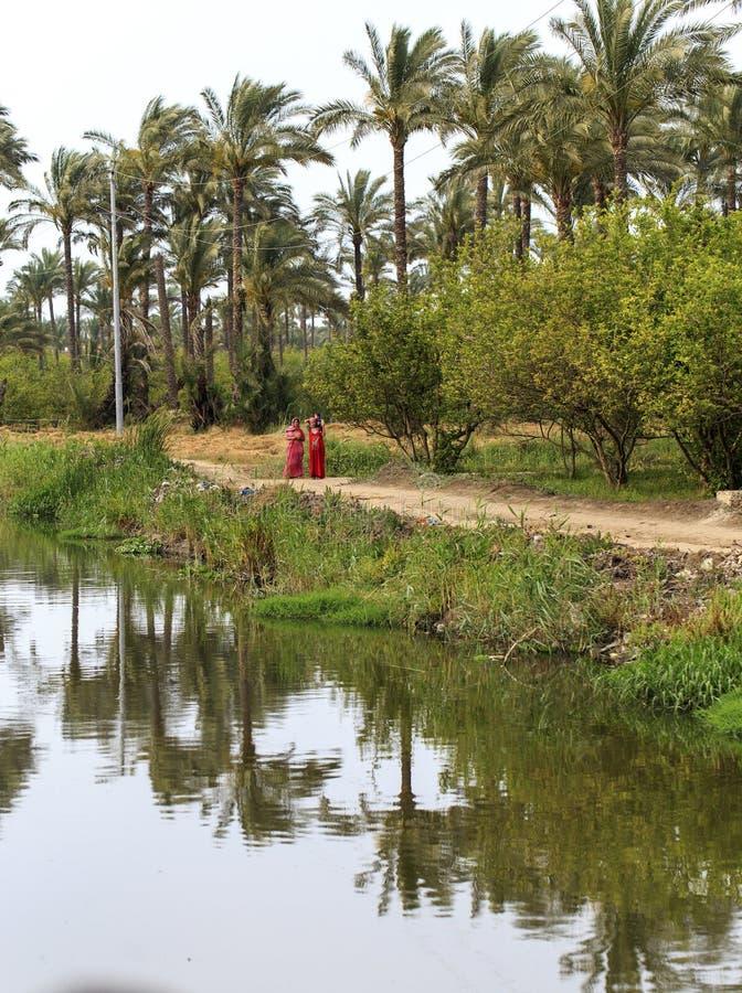 Damietta, Egitto, - 22 maggio 2015: Villaggio non identificato w egiziano fotografia stock libera da diritti