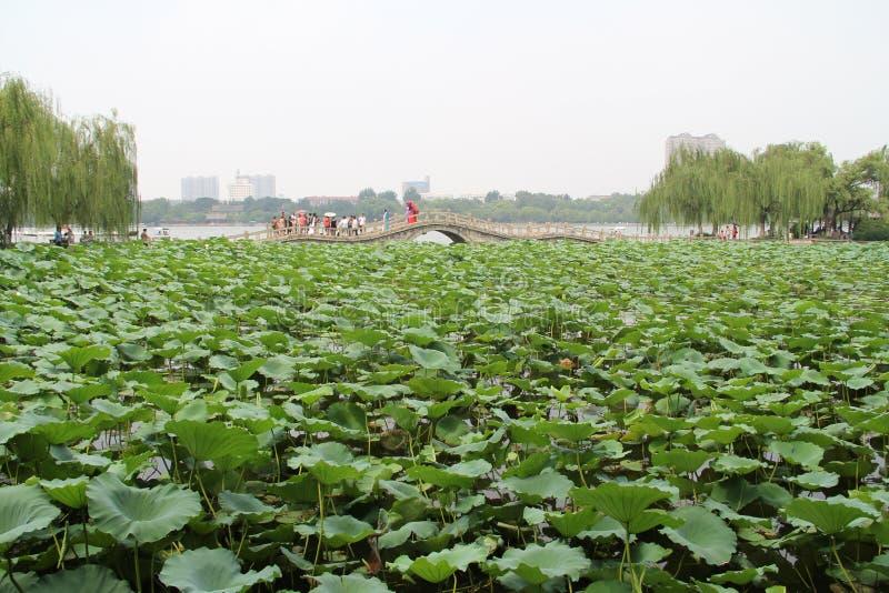 Daming Lake, Jinan-Stadt, Shandong-Provinz, China-Park stockbild