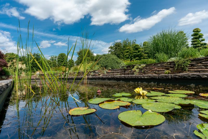 Damm för formell trädgård med näckrors och liljablock arkivbild