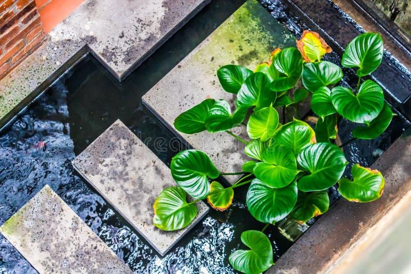 Damm för inomhus trädgård royaltyfri bild