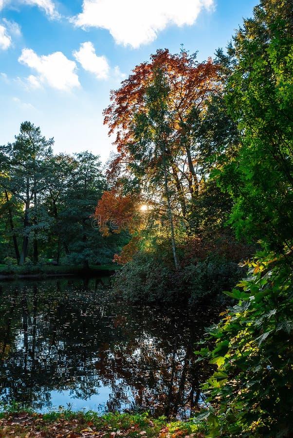 Damm i parken arkivbilder
