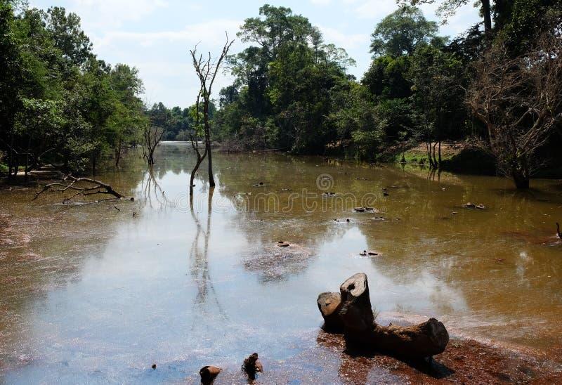 Damm med lerigt vatten i det dystra landskapet för skog arkivbilder
