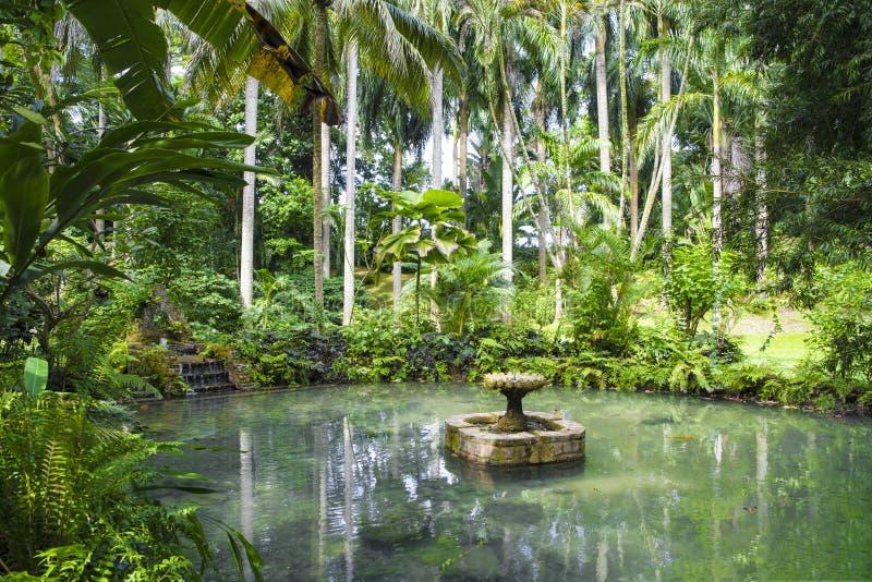Damm med vatten väl i Konoko trädgårdar, Jamaica royaltyfria foton