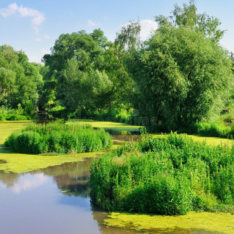 Download Damm med vattenväxter arkivfoto. Bild av naturligt, miljö - 27278084