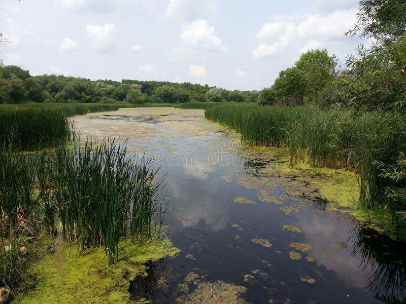 Damm på delstatsparken royaltyfri fotografi