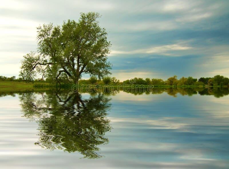 damm reflekterade treeskymning arkivfoto