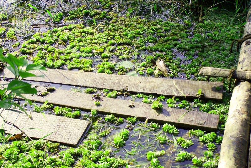 Download Dammby arkivfoto. Bild av damm, plankor, solljus, wild, vatten - 48216