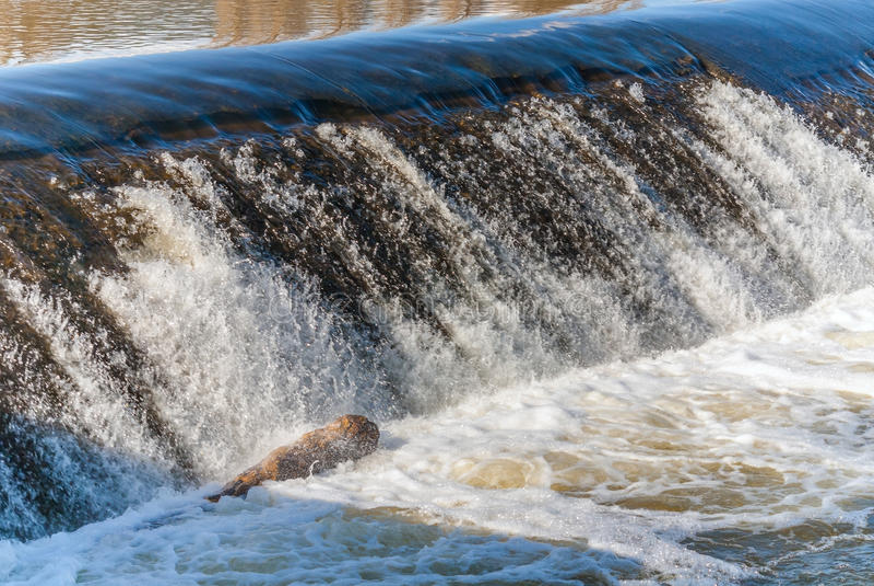 Dammbyggnad för flodvatten med den döda fisken royaltyfri fotografi